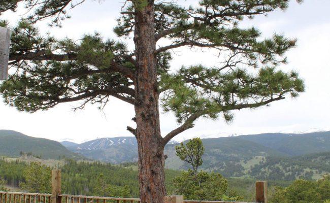 Wedding Venue with views of Eldora Ski Slope