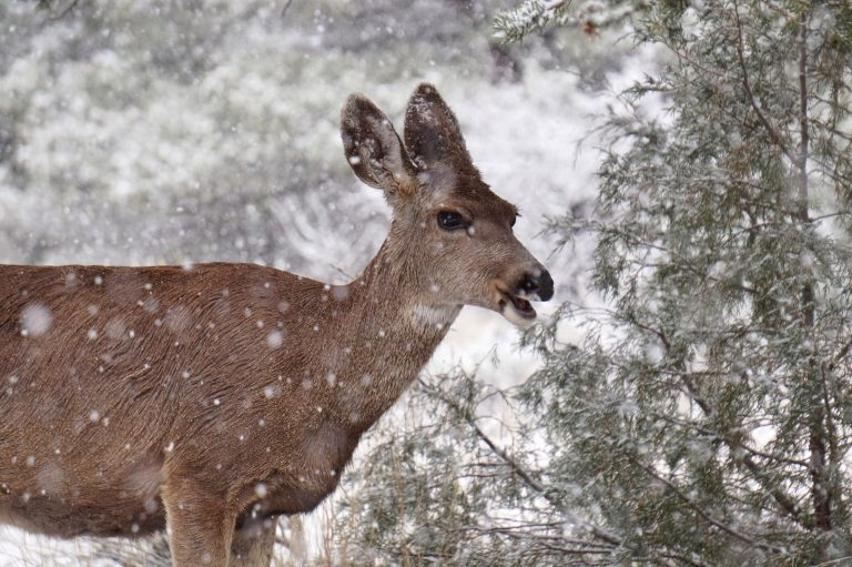 mike-lewinski-E8-winter deer-unsplash
